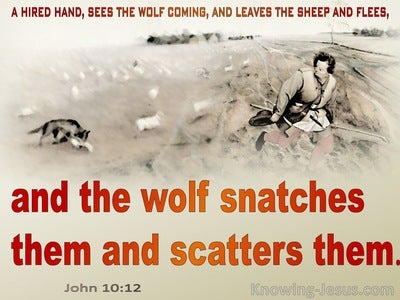 John 10:12 The Wolf Snatches And Scatters Them (red)