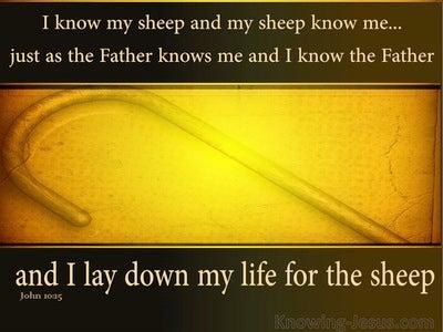 John 10:15: I Know My Sheep (yellow)