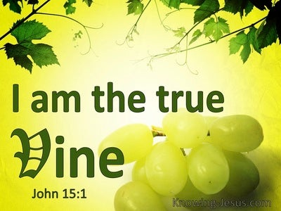 John 15:1 Jesus Said I Am The True Vine (windows)01:26