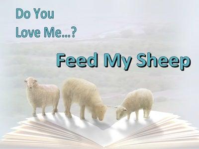 John 21:16 Do You Love Me Feed My Sheep (white)