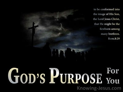 God's Purpose For You (devotional) (black) - Romans 8-29