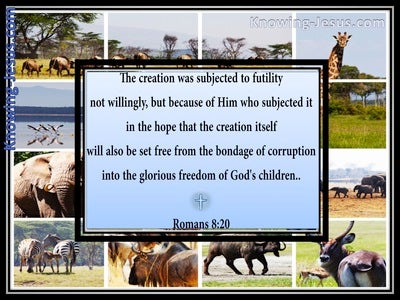 Romans 8:20 All Creation Is Subject To Futility (blue)