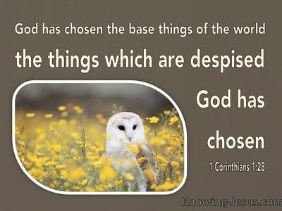 1 Corinthians 1:28 The Things Which Are Despised God Has Chosen (brown)
