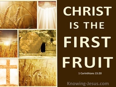 1 Corinthians 15:20 Christ Is Risen The Firstfruit Of Them That Slept (brown)