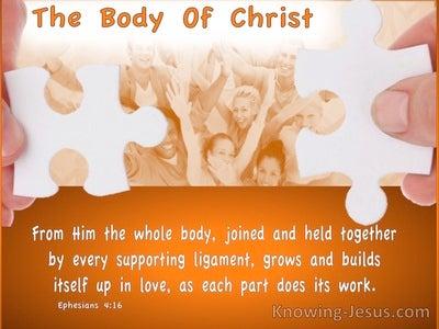 Ephesians 4:16 Body Building (devotional)12:10 (orange)
