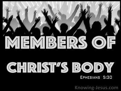Ephesians 5:30 Members Of His Body And His Bones (gray)