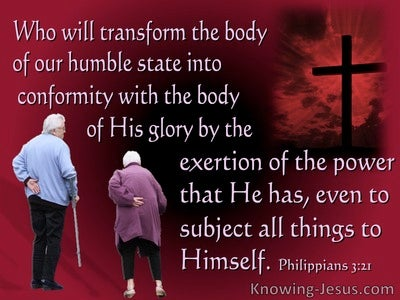 Philippians 3:21 He  Will Transform Our Lowly Body (pink)