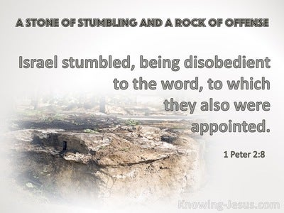 1 Peter 2:8 They Stumble, Being Disobedient To The Word (gray)