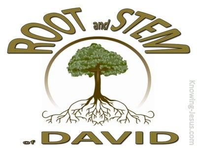 Revelation 22:16 Root and Stem of David (devotional) (white)