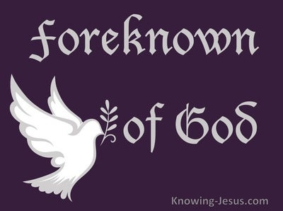 Romans 8:29 Foreknown of God (devotional)12-01 (white)