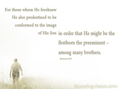 Romans 8:29 Conformed To The Image Of His Son (white)