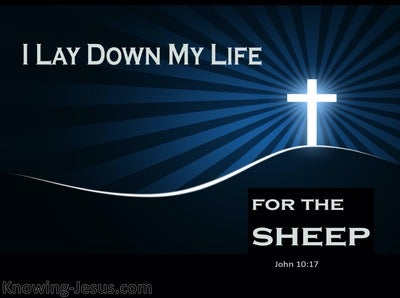 John 10:17 I Lay Down My Life For The Sheep (blue)