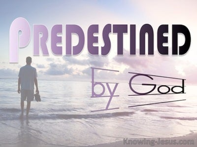 Romans 8:29 Those He Foreknew He Predestined : by God (devotional)12:02 (pink)