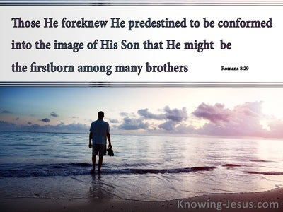 Romans 8:29 Those He Foreknew He Predestined : by God (devotional)12:02 (gray)