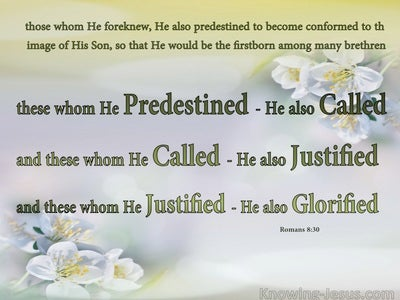 Romans 8:30 Those He Predentined He Also Called (pink)