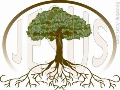 Revelation 22:16 Root and Stem of David (devotional)08:31 (pink)