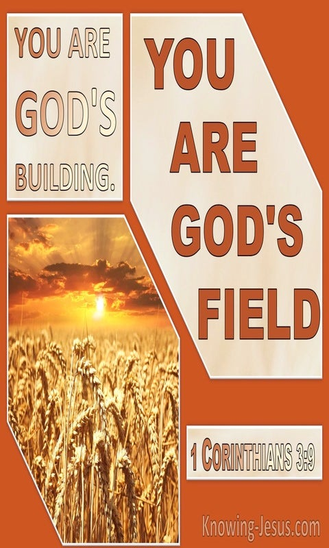1 Corinthians 3:9 We Are Gods Building You Are Gods Field (orange)