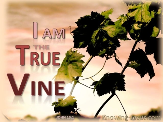 John 15:1 The True Vine (brown)