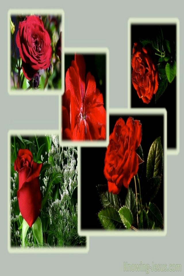 Roses (red)