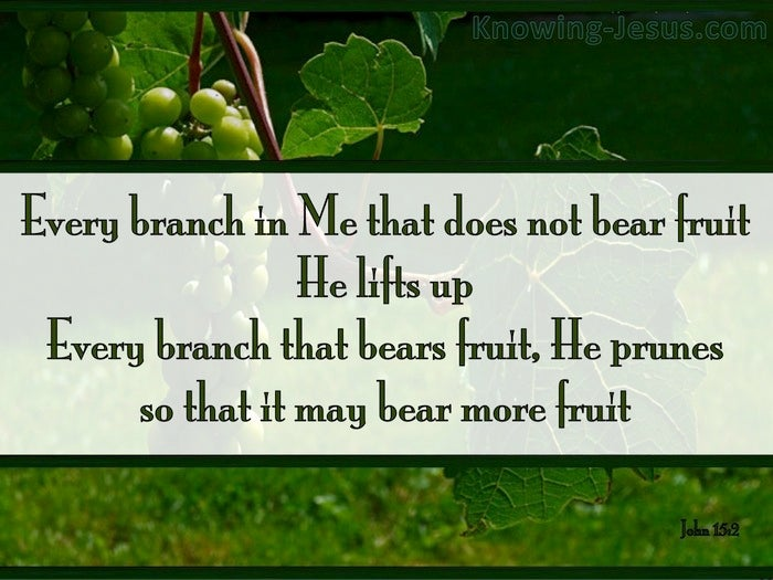 10 Bible Verses About Pruning
