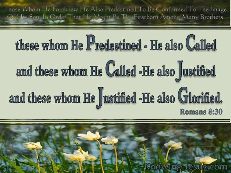 Romans 8:30 Foreknown Predestined Called Justified Glorified (sage)