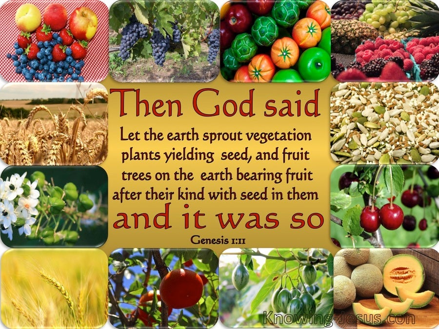 Genesis 1:11 Let The Earth Sprout Vegetation (gold)