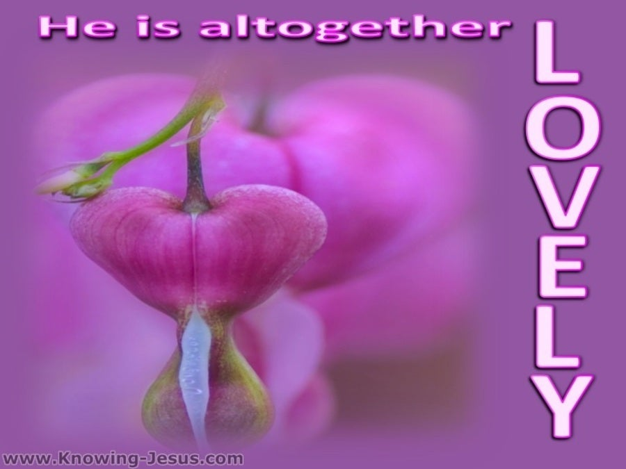 Song of Solomon 5-16 He Is Altogether Lovely (pink)