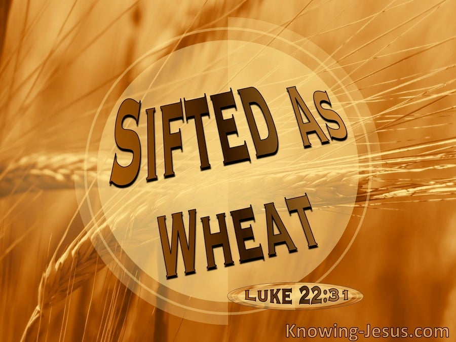 Luke 22:31 Sifted As Wheat (brown)