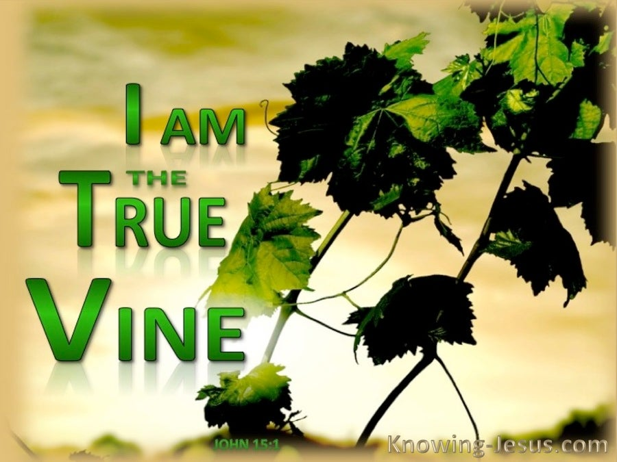 John 15:1 The True Vine (green)