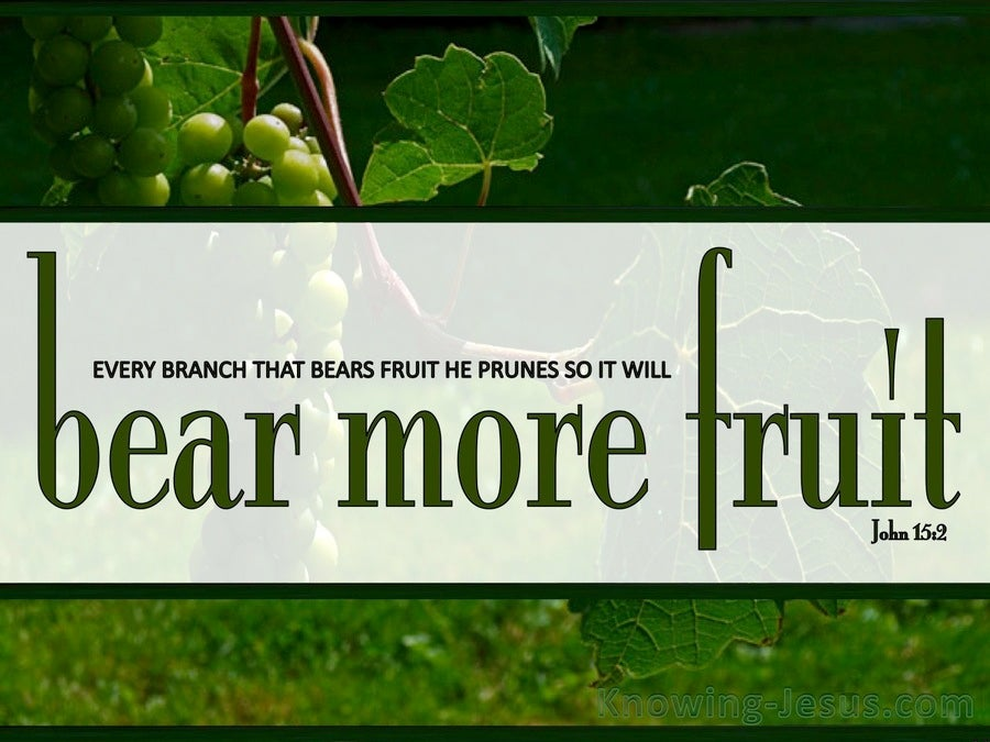 John 15:2 Every Branch That Bears Fruit (sage)