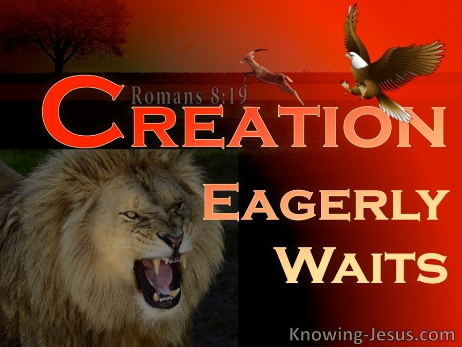 Romans 8:19 The Whole Creation Groans (red)