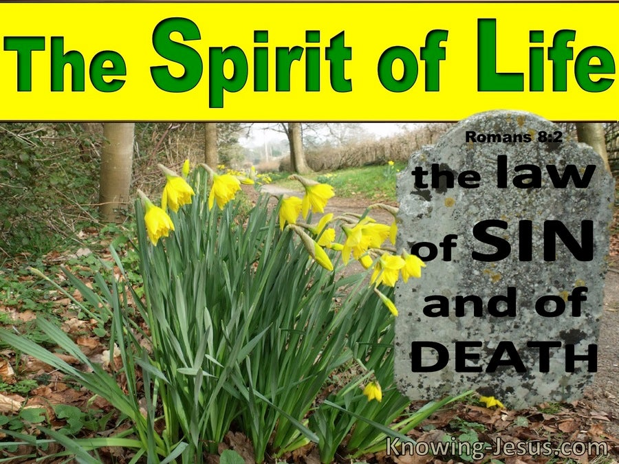 Romans 8:2 The Law Of The Spirit Of Life (green)