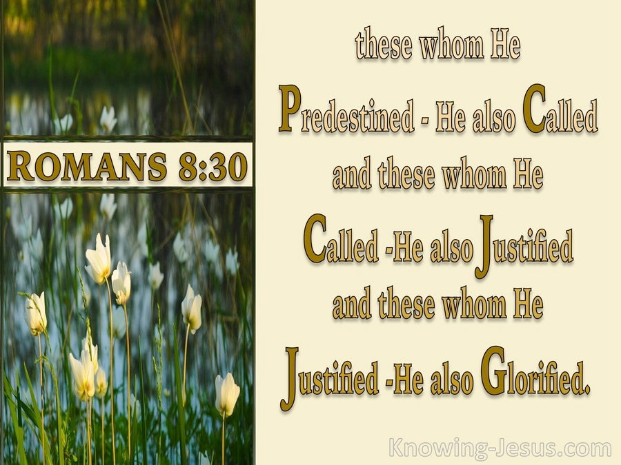 Romans 8:30 Foreknown Predestined Called Justified Glorified (cream)