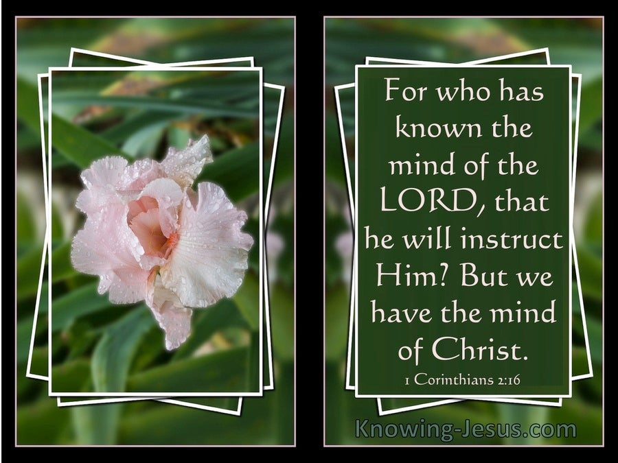 1 Corinthians 2:16 We Have The Mind Of Christ (pink)