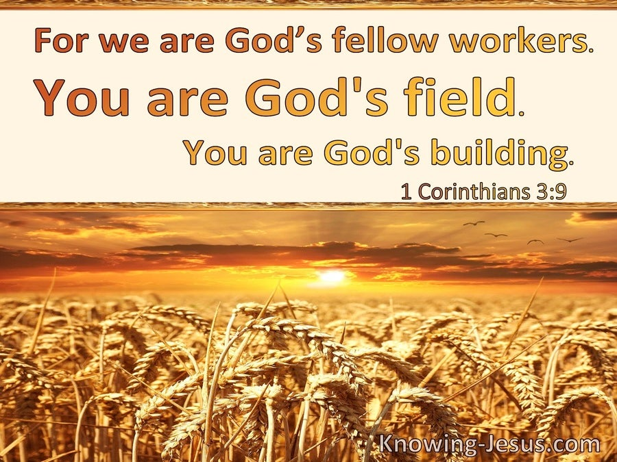 1 Corinthians 3:9 We Are Gods Fellow Workers You Are Gods Field And Building (yellow)