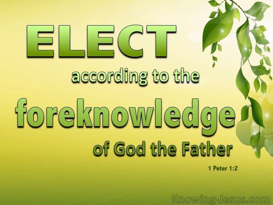 1 Peter 1:2 Elect According To the Foreknowledge of God (yellow)