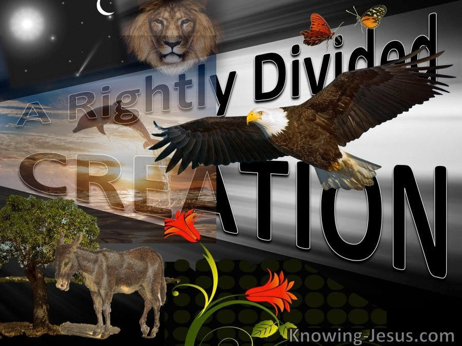 A Rightly Divided Creation (devotional)11-26 (brown)