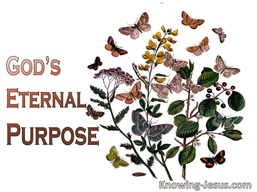 God's Eternal Purpose (devotional) (white)