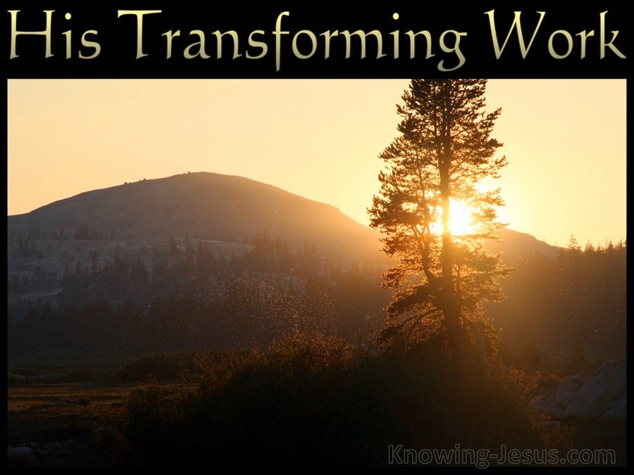 His Transforming Work (devotional) (brown)
