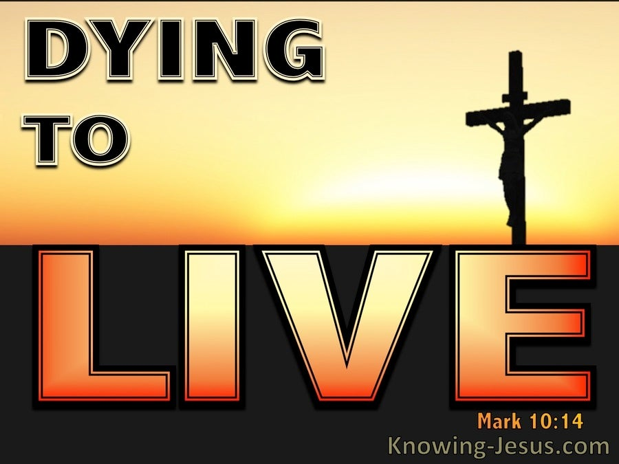 Dying To Live (devotional) (orange)