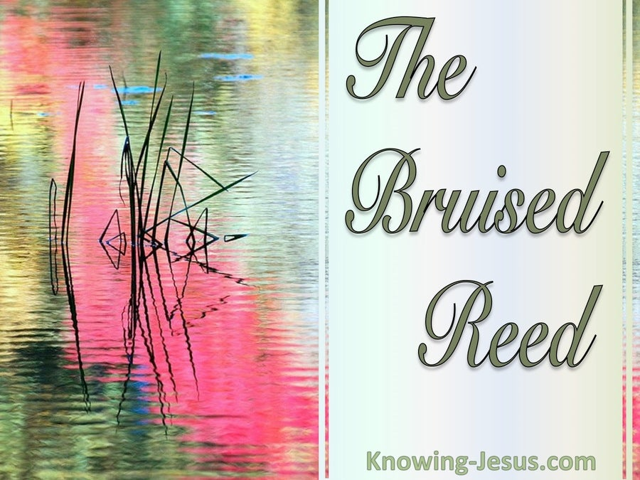 The Bruised Reed (devotional) (sage) - Isaiah 42:3