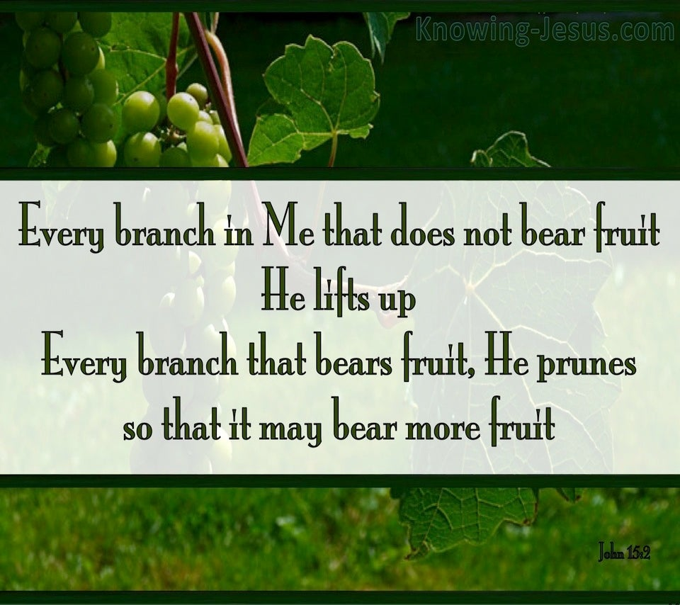 John 15:2 Every Branch That Bears Fruit (green)