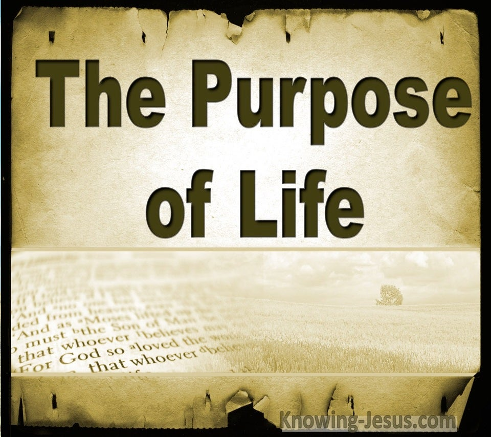 The Purpose Of Life (devotional) (gold)